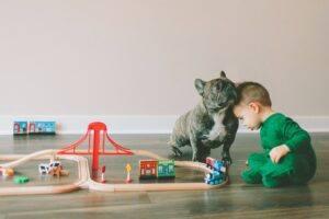 bulldog francez si copil
