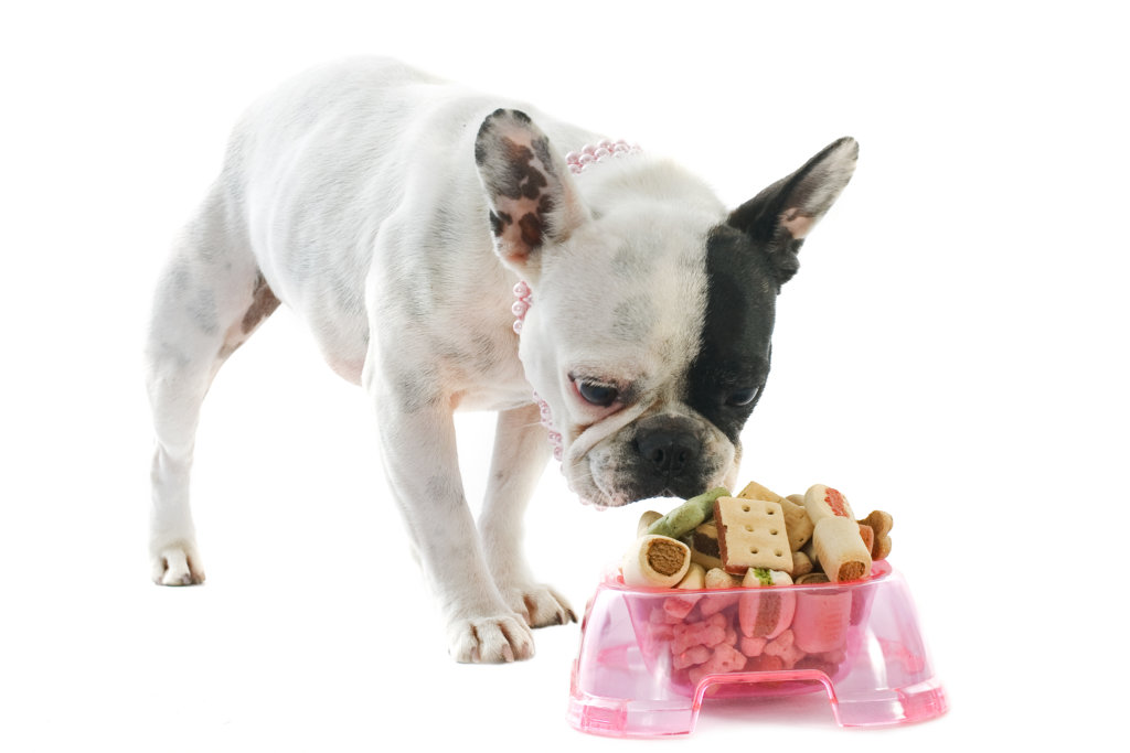 alimente interzise bulldog francez