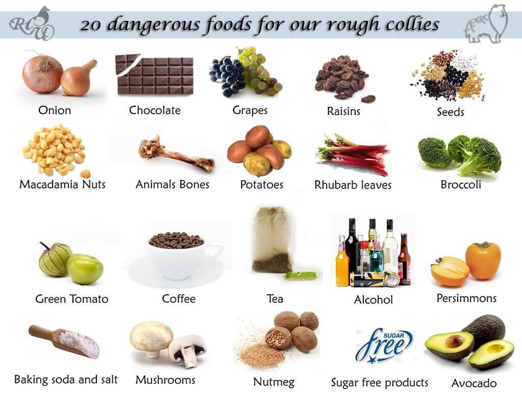 Alimente periculoase caine