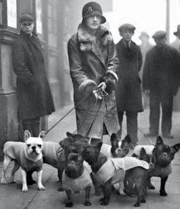 istorie Bulldog Francez România