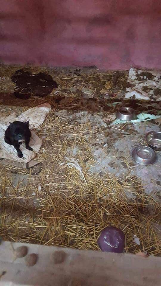 ro1 Bulldog Francez România
