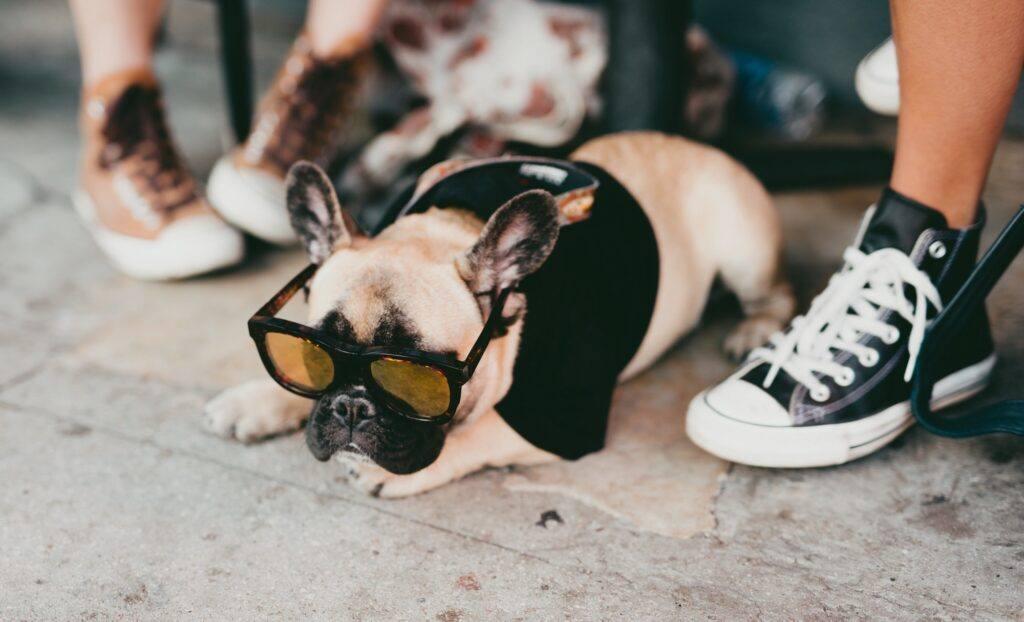 bulldog francez in vacanta