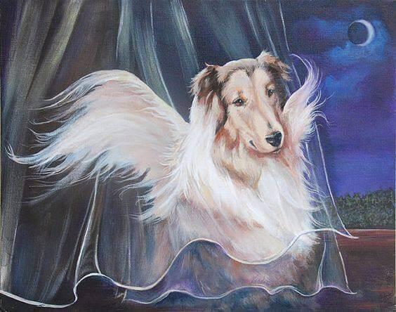 collie Bulldog Francez România