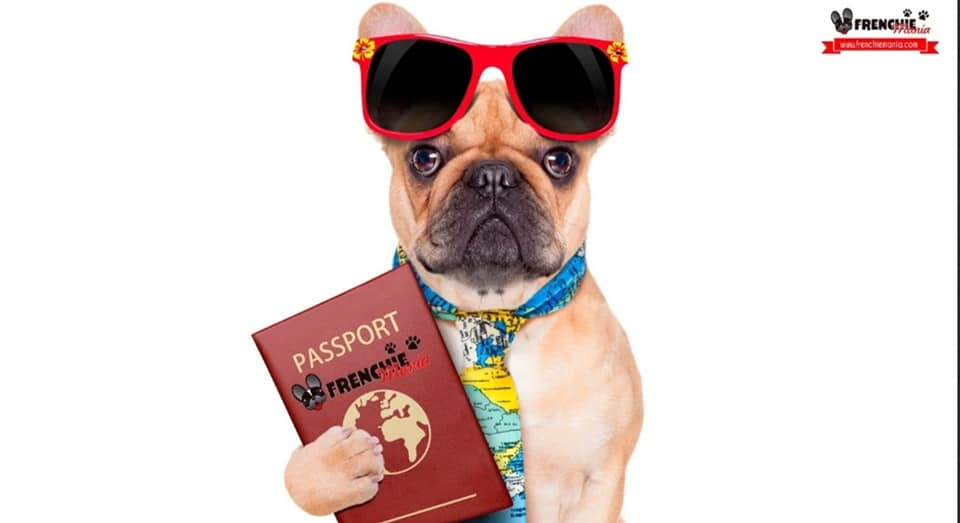 frenchie passport